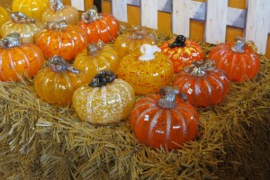 Classic Orange Pumpkins